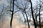 Smoke Rises