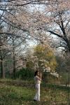 Cherry Blossom #15