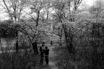 Cherry Blossom #20