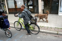 Cycle Pooch