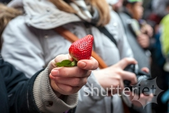 Strawberry Ceremony 05